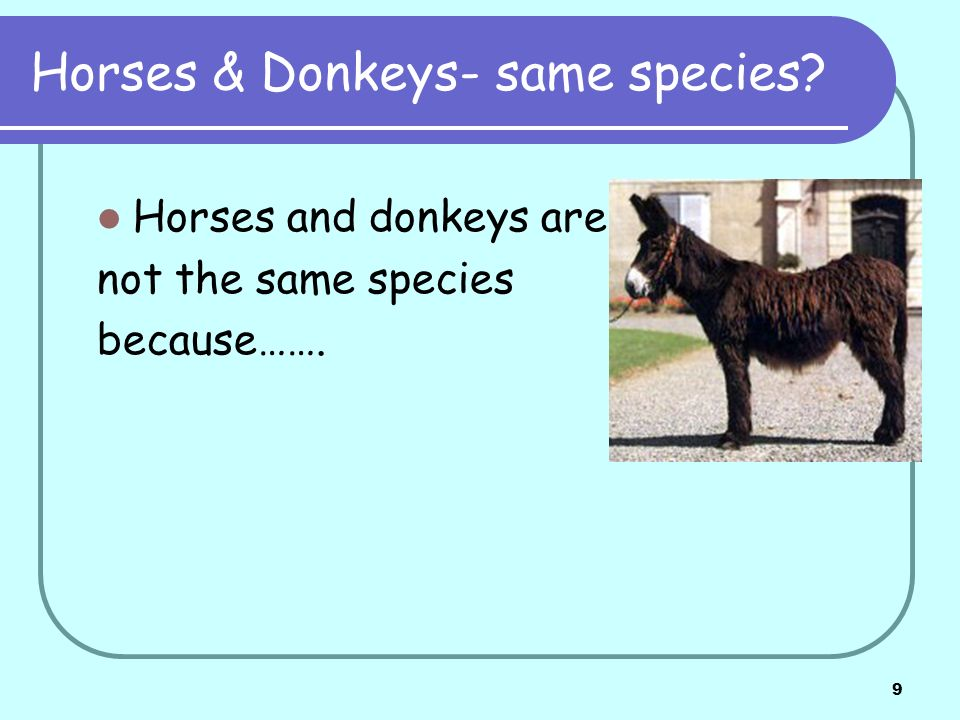 10 Other examples- same species.Oak & Poplar trees are/are not the same species because…….