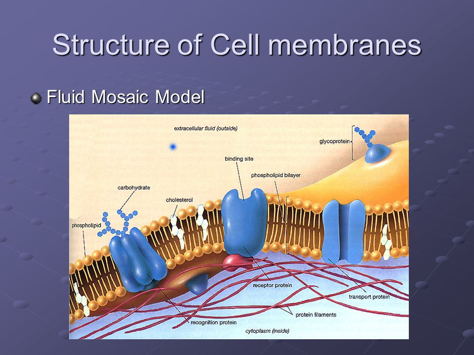 Structure of Cell membranes Fluid Mosaic Model