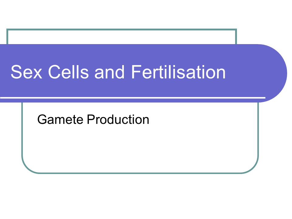Sex Cells and Fertilisation Gamete Production