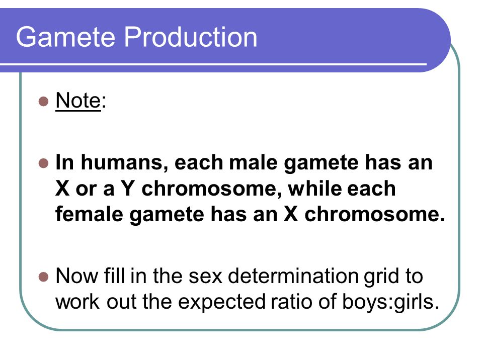 Gamete Production Note: In humans, each male gamete has an X or a Y chromosome, while each female gamete has an X chromosome. Now fill in the sex dete