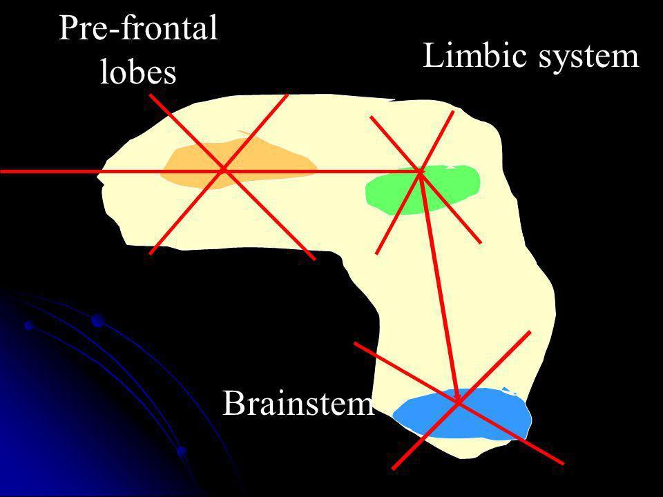 Pre-frontal lobes Limbic system Brainstem