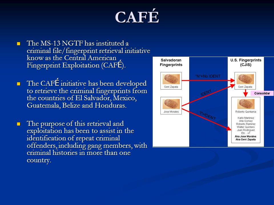 CAFÉ The MS-13 NGTF has instituted a criminal file/fingerprint retrieval initiative know as the Central American Fingerprint Exploitation (CAF É ). Th