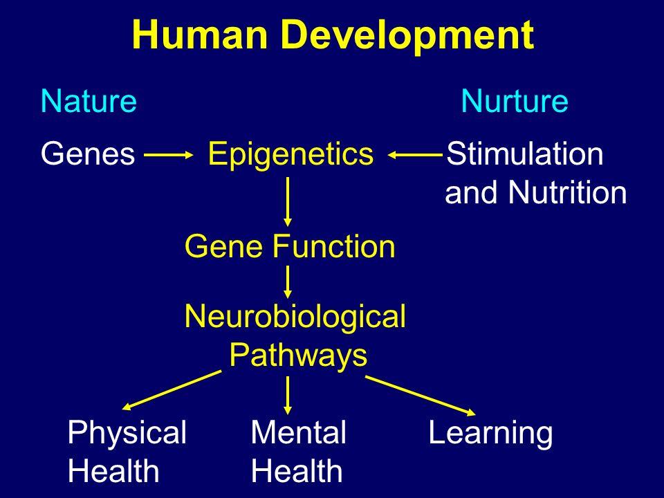 Human Development Nature Nurture Genes Epigenetics Stimulation and Nutrition Gene Function Neurobiological Pathways Physical Mental Learning Health He