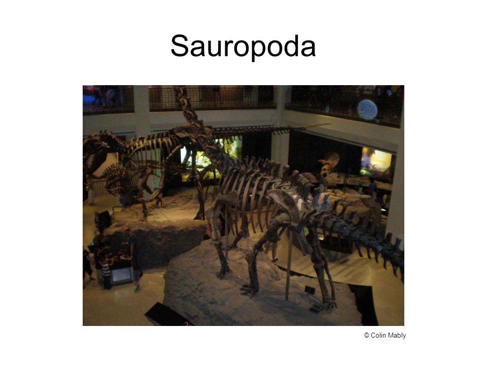 Sauropoda © Colin Mably