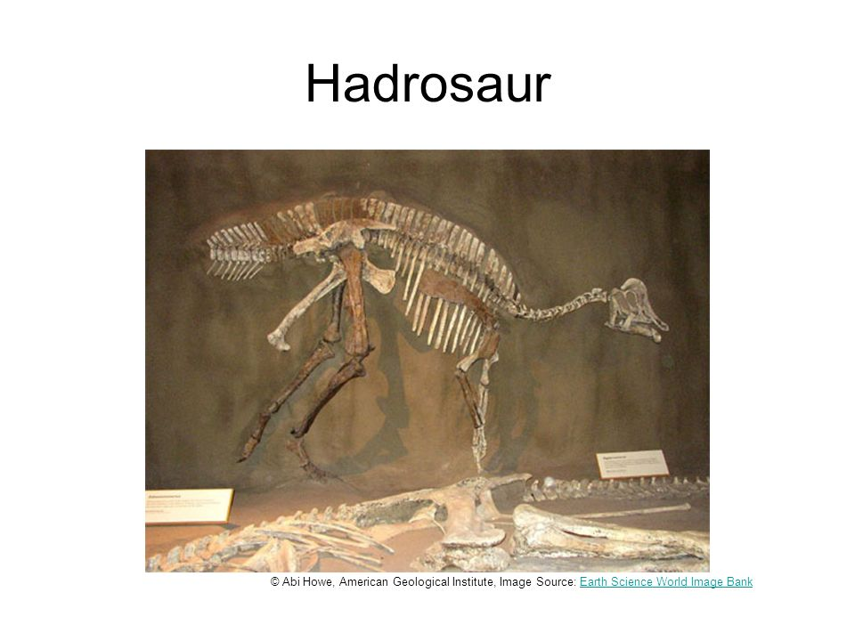 Hadrosaur © Abi Howe, American Geological Institute, Image Source: Earth Science World Image BankEarth Science World Image Bank