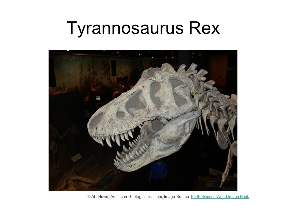 Tyrannosaurus Rex © Abi Howe, American Geological Institute, Image Source: Earth Science World Image BankEarth Science World Image Bank