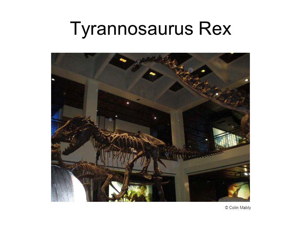 Tyrannosaurus Rex © Colin Mably