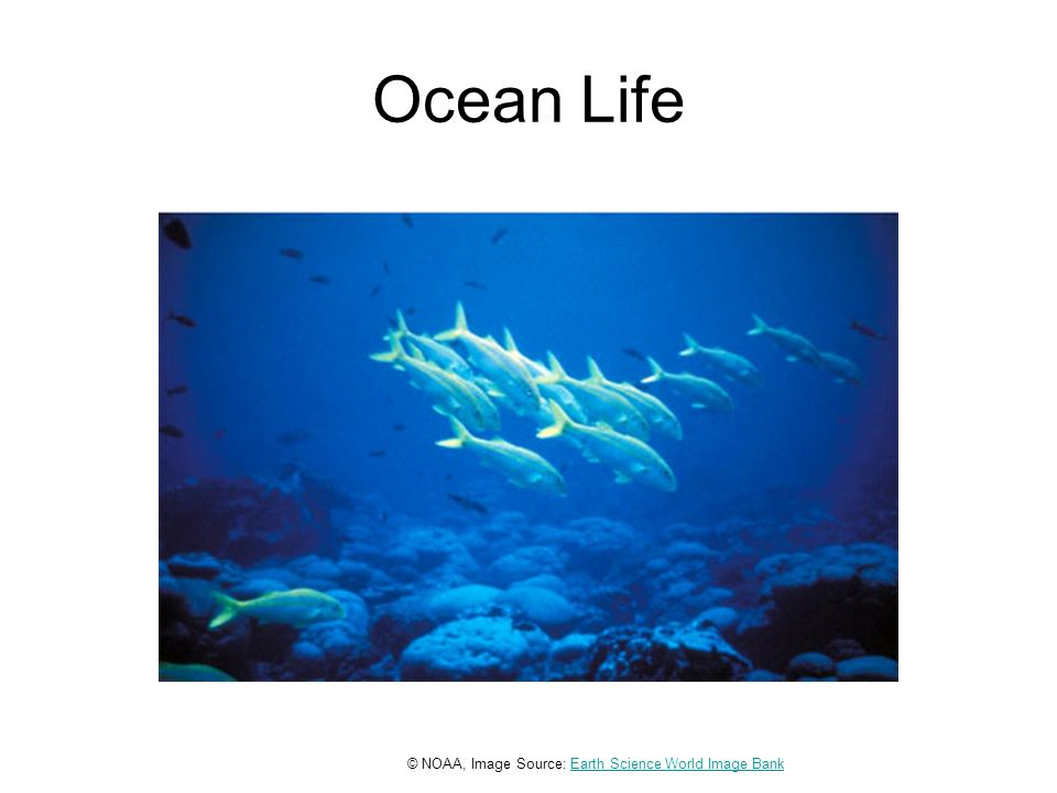 Ocean Life © NOAA, Image Source: Earth Science World Image BankEarth Science World Image Bank