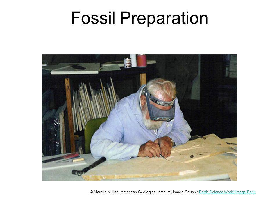Fossil Preparation © Marcus Milling, American Geological Institute, Image Source: Earth Science World Image BankEarth Science World Image Bank