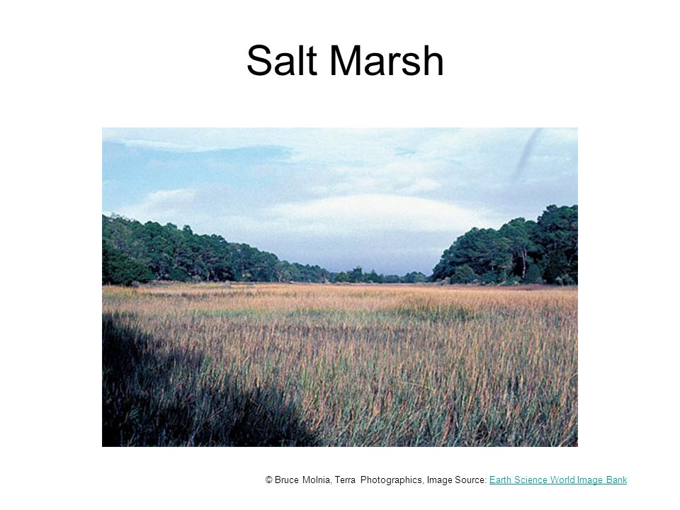 Salt Marsh © Bruce Molnia, Terra Photographics, Image Source: Earth Science World Image BankEarth Science World Image Bank
