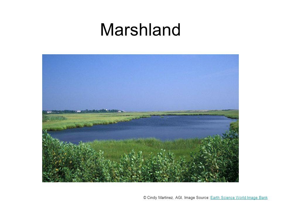 Marshland © Cindy Martinez, AGI, Image Source: Earth Science World Image BankEarth Science World Image Bank