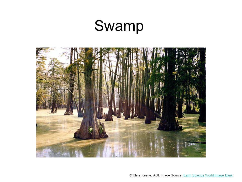 Swamp © Chris Keene, AGI, Image Source: Earth Science World Image BankEarth Science World Image Bank