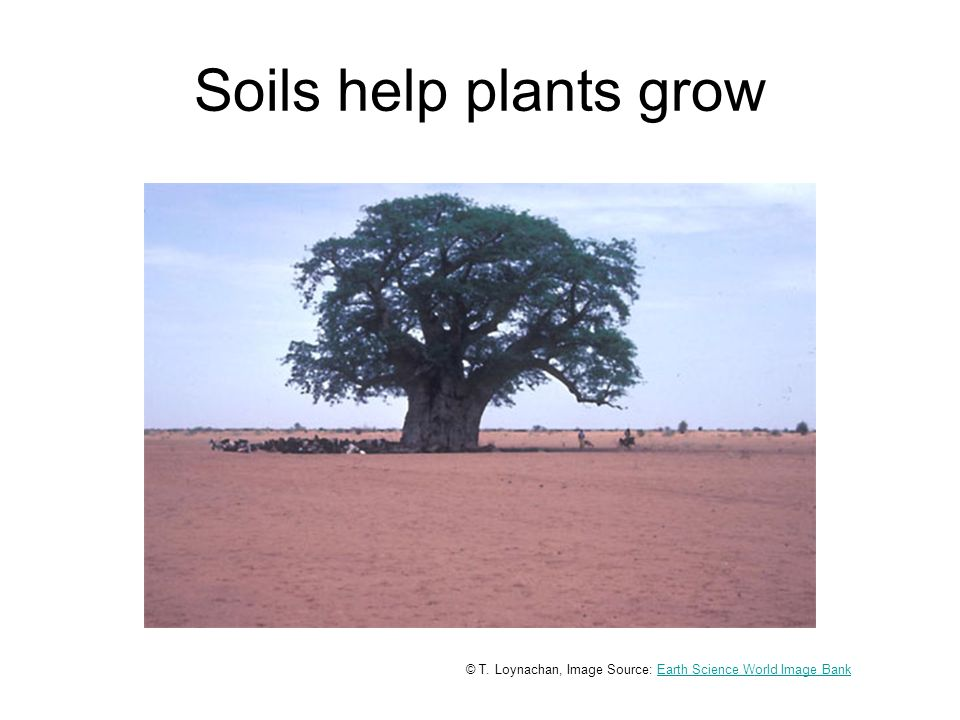 Soils help plants grow © T.
