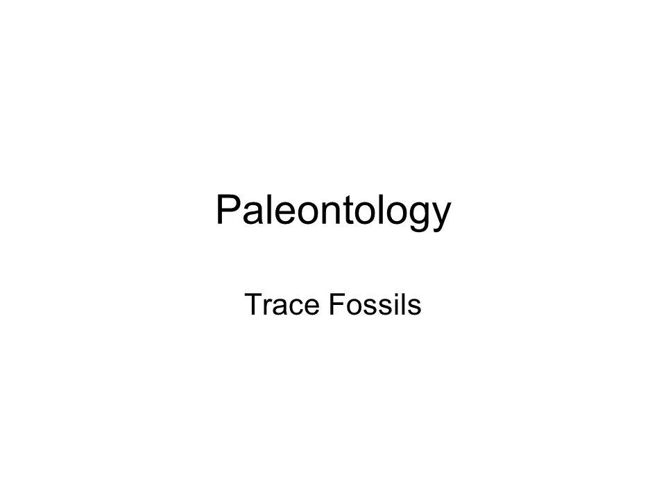 Paleontology Trace Fossils