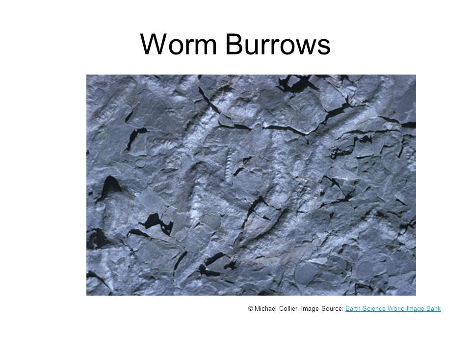Worm Burrows © Michael Collier, Image Source: Earth Science World Image BankEarth Science World Image Bank