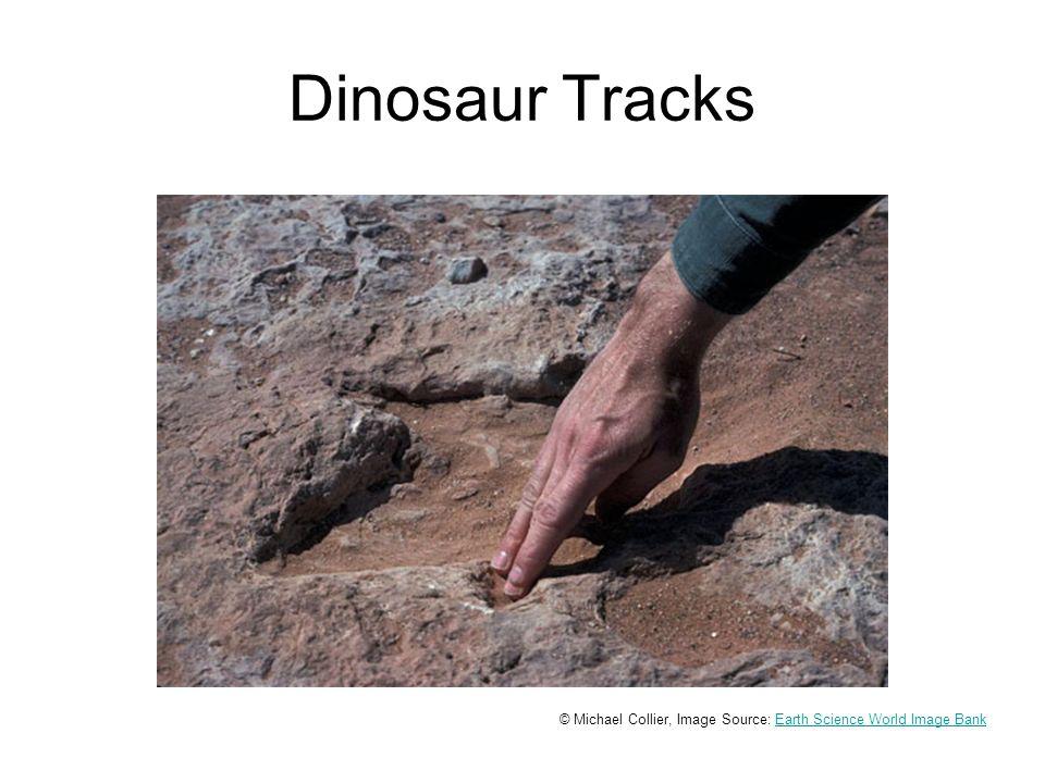 Dinosaur Tracks © Michael Collier, Image Source: Earth Science World Image BankEarth Science World Image Bank