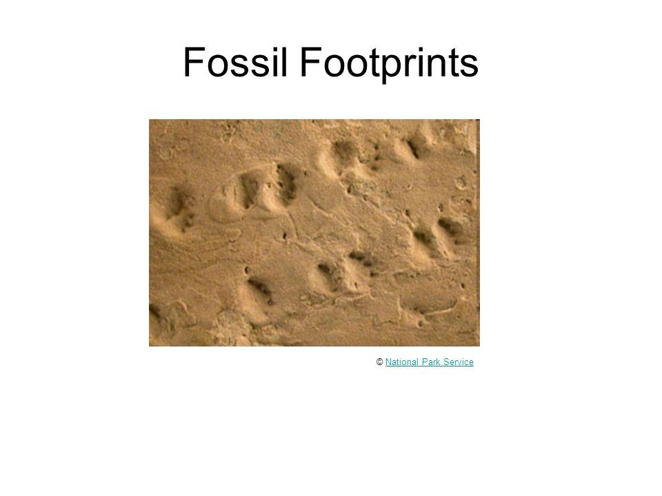 Fossil Footprints © National Park ServiceNational Park Service