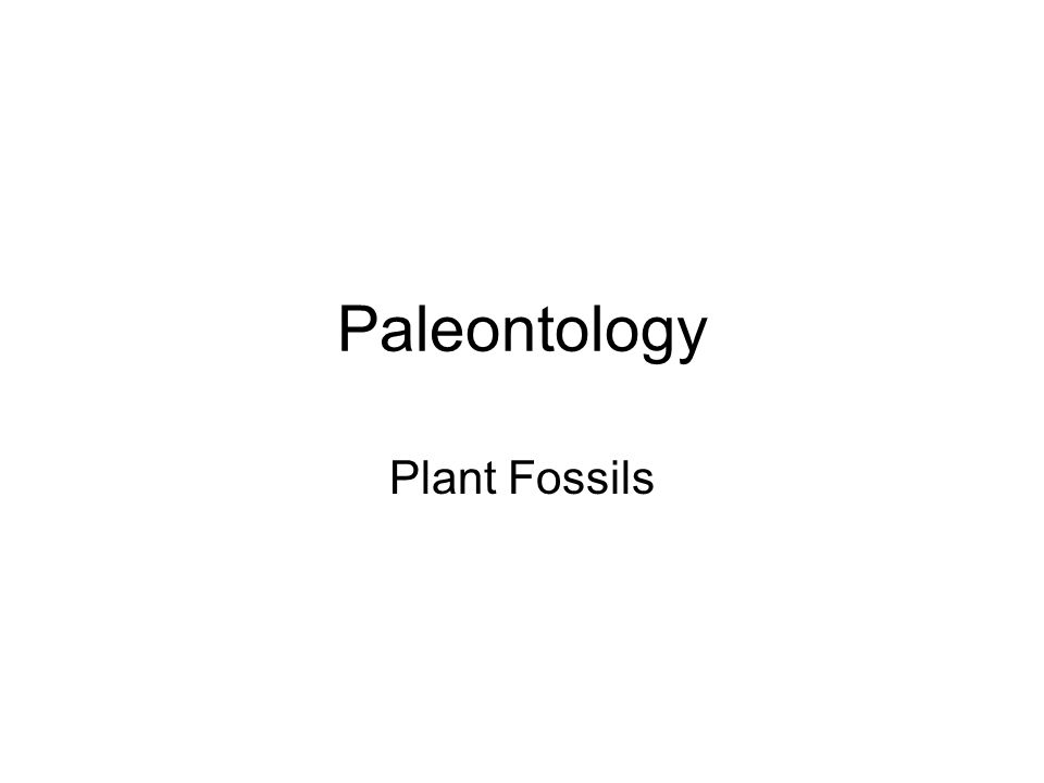 Paleontology Plant Fossils
