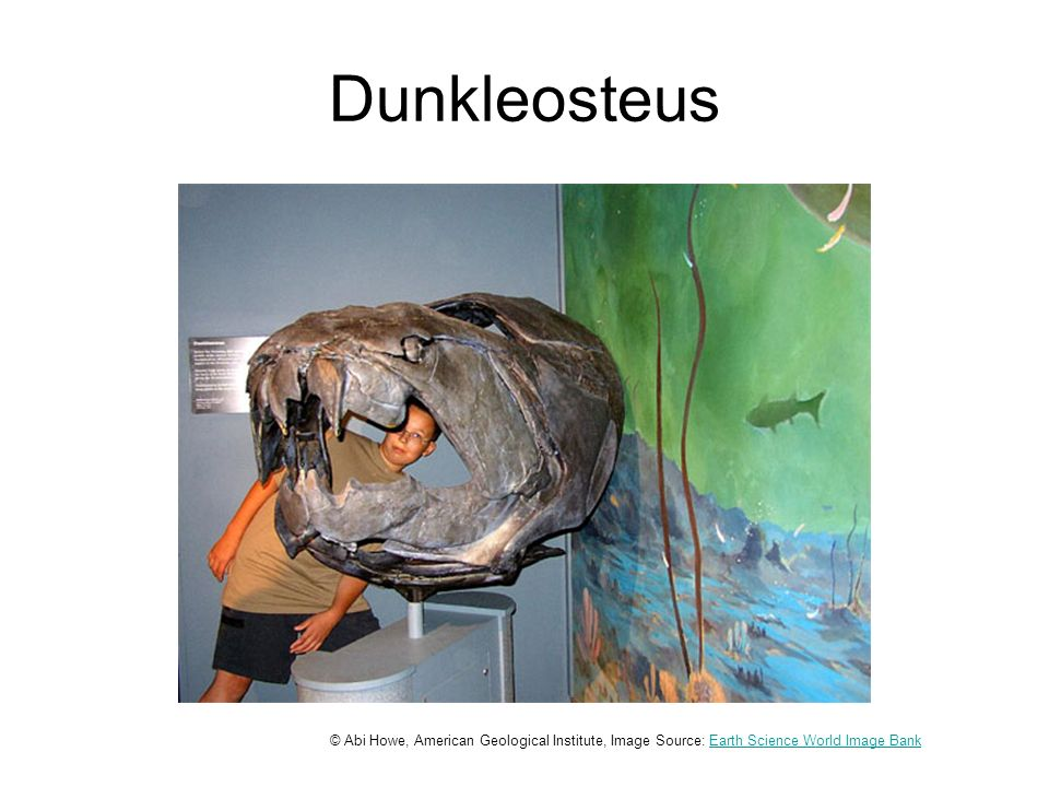 Dunkleosteus © Abi Howe, American Geological Institute, Image Source: Earth Science World Image BankEarth Science World Image Bank