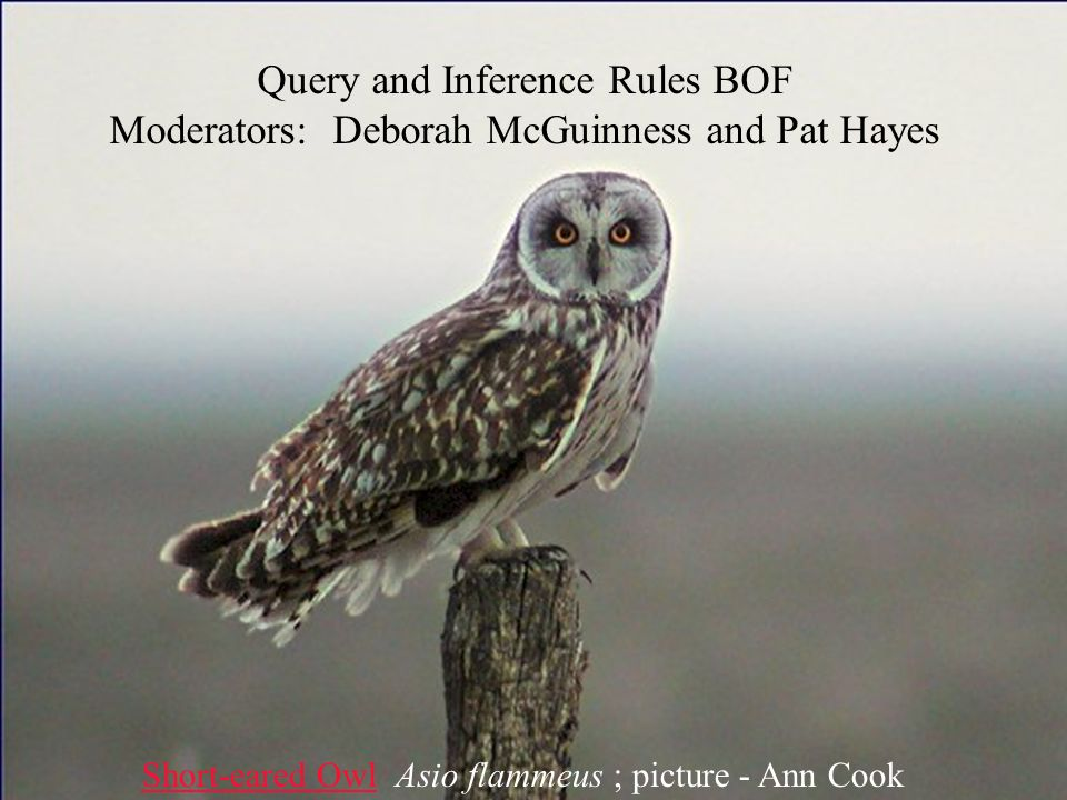 McGuinness Oct 17, 2002 1 Query and Inference Rules BOF Moderators: Deborah McGuinness and Pat Hayes Short-eared OwlShort-eared Owl Asio flammeus ; picture - Ann Cook