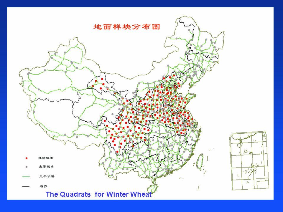 The Quadrats for Winter Wheat