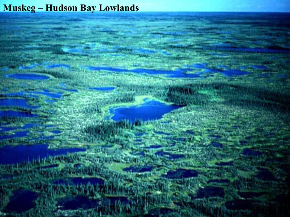 Muskeg – Hudson Bay Lowlands