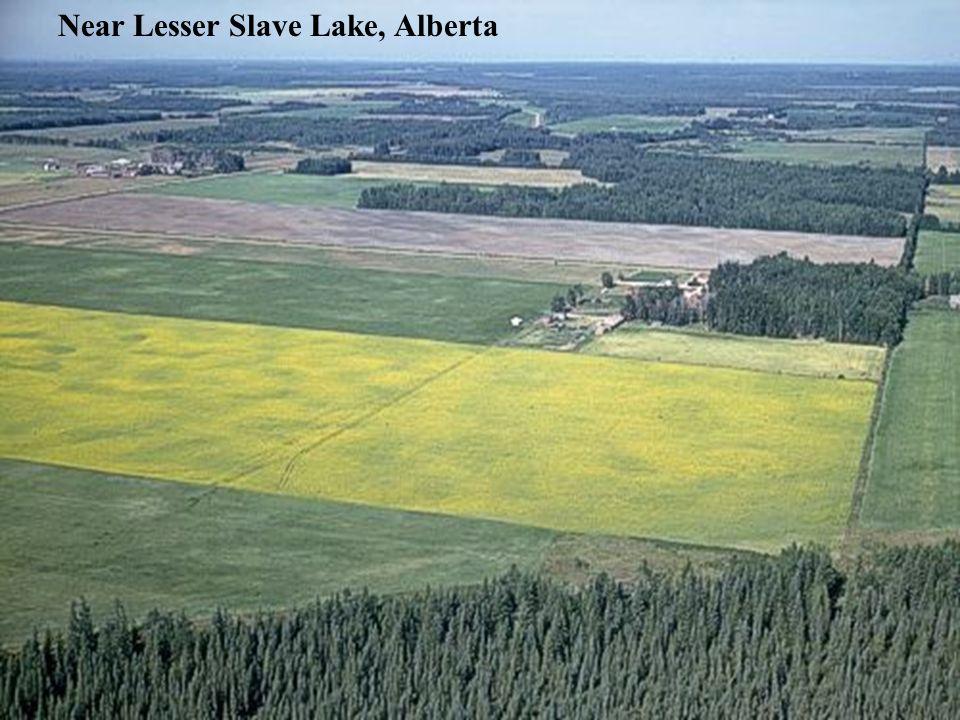 Near Lesser Slave Lake, Alberta