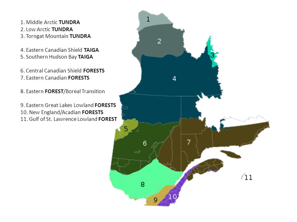 1. Middle Arctic TUNDRA 2. Low Arctic TUNDRA 3. Torngat Mountain TUNDRA 4. Eastern Canadian Shield TAIGA 5. Southern Hudson Bay TAIGA 6. Central Canad