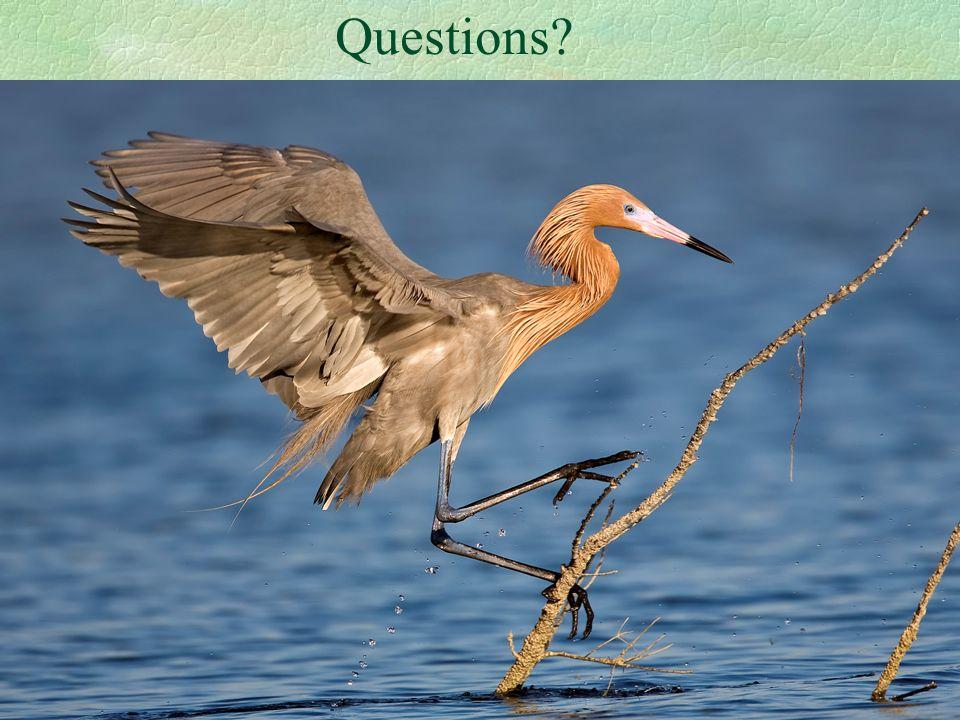 9 Questions?