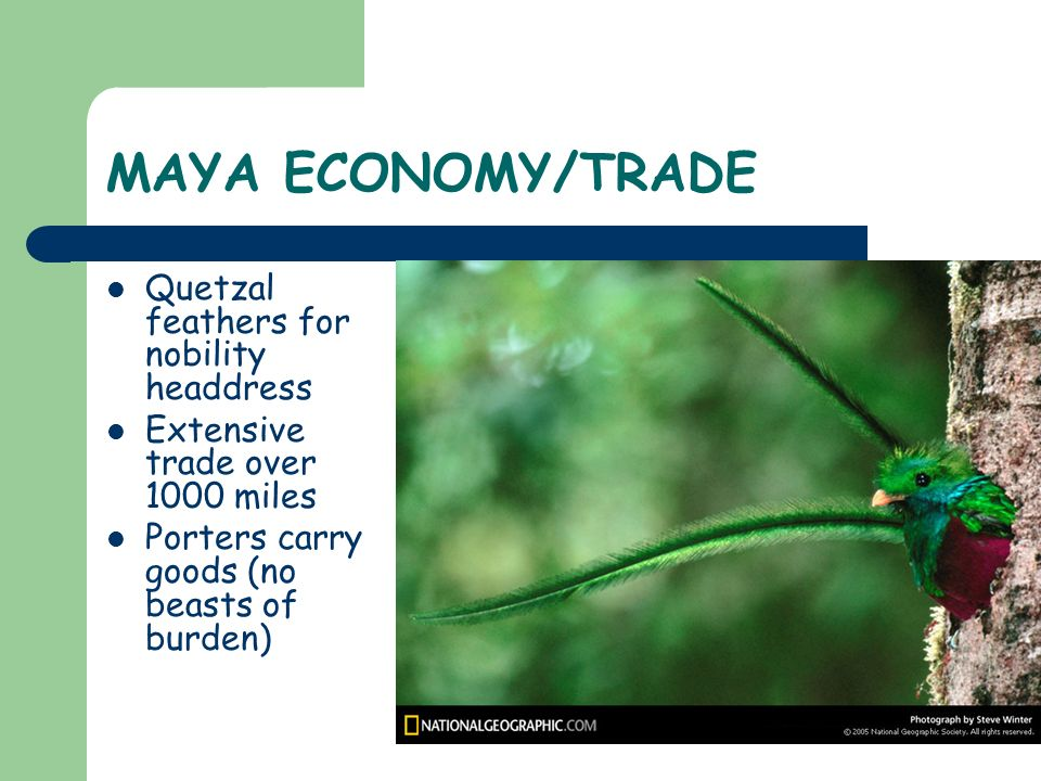 MAYA ECONOMY/TRADE Quetzal feathers for nobility headdress Extensive trade over 1000 miles Porters carry goods (no beasts of burden)
