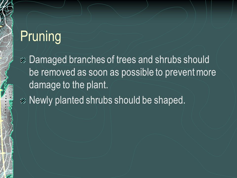 Damaged branches of trees and shrubs should be removed as soon as possible to prevent more damage to the plant.