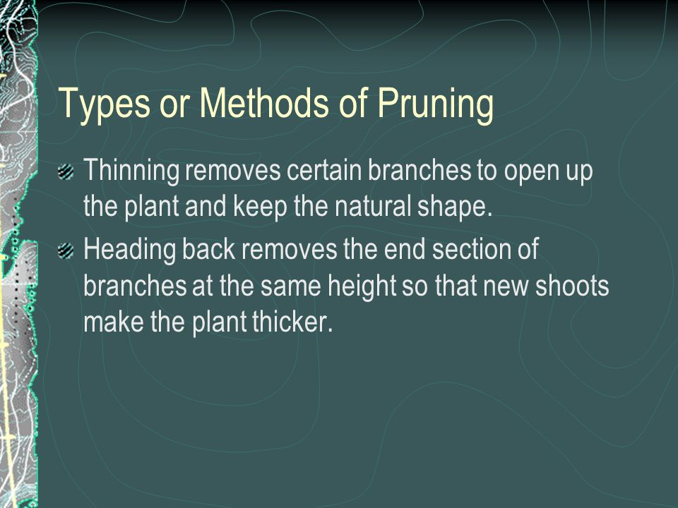 Types or Methods of Pruning Thinning removes certain branches to open up the plant and keep the natural shape.