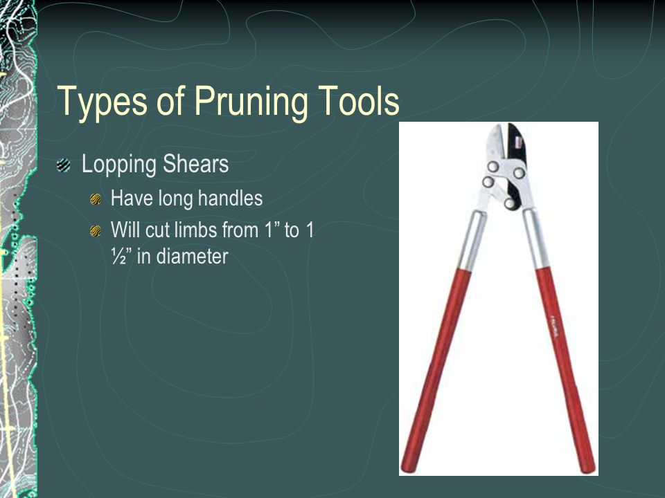 Types of Pruning Tools Lopping Shears Have long handles Will cut limbs from 1 to 1 ½ in diameter