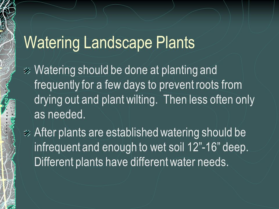 Watering Landscape Plants Watering should be done at planting and frequently for a few days to prevent roots from drying out and plant wilting.