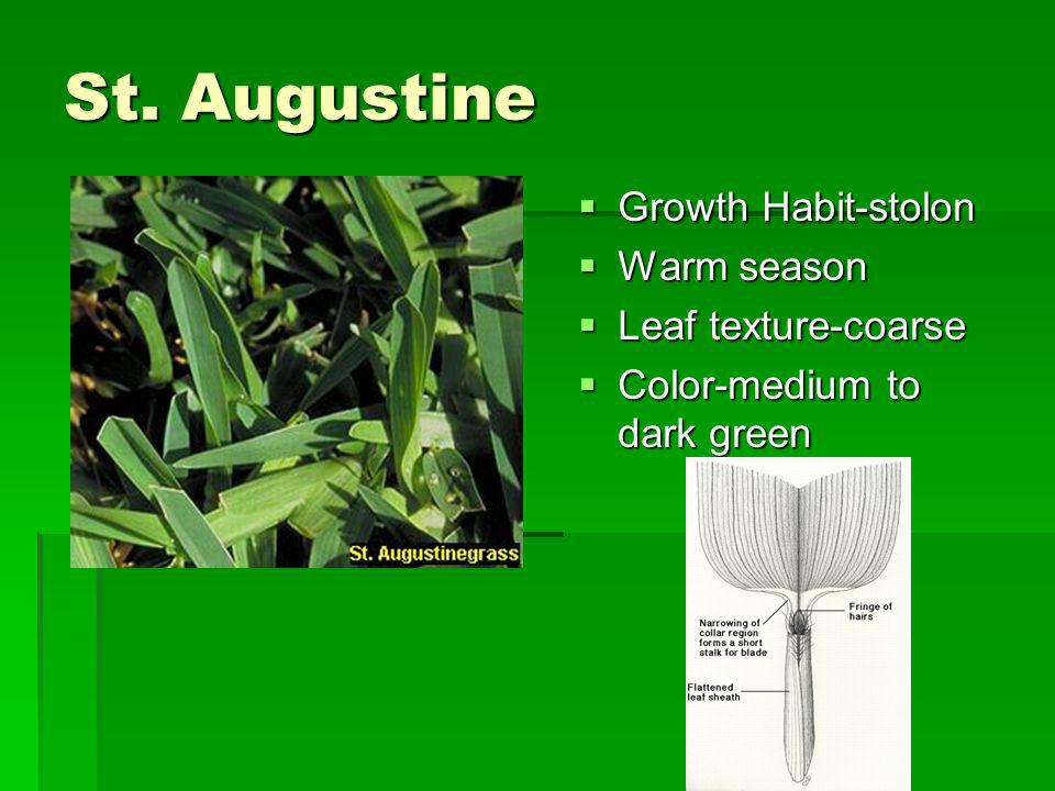 St. Augustine Growth Habit-stolon Growth Habit-stolon Warm season Warm season Leaf texture-coarse Leaf texture-coarse Color-medium to dark green Color
