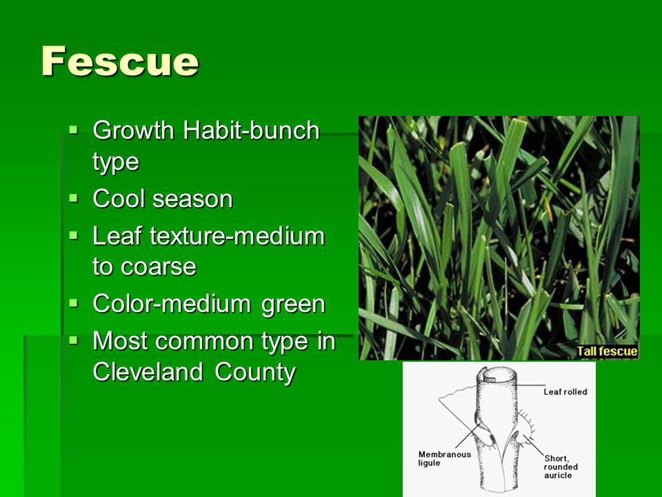 Fescue Growth Habit-bunch type Growth Habit-bunch type Cool season Cool season Leaf texture-medium to coarse Leaf texture-medium to coarse Color-mediu