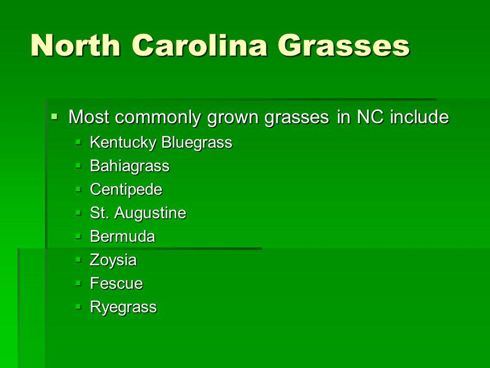 North Carolina Grasses Most commonly grown grasses in NC include Most commonly grown grasses in NC include Kentucky Bluegrass Kentucky Bluegrass Bahia