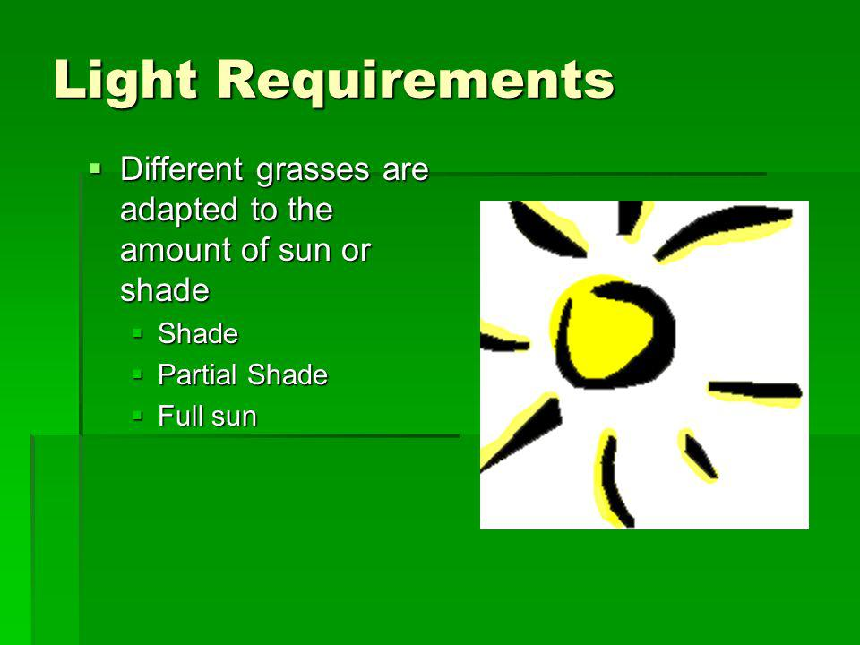 Light Requirements Different grasses are adapted to the amount of sun or shade Different grasses are adapted to the amount of sun or shade Shade Shade