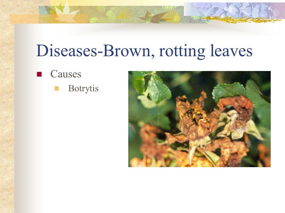 Diseases-Brown, rotting leaves Causes Botrytis