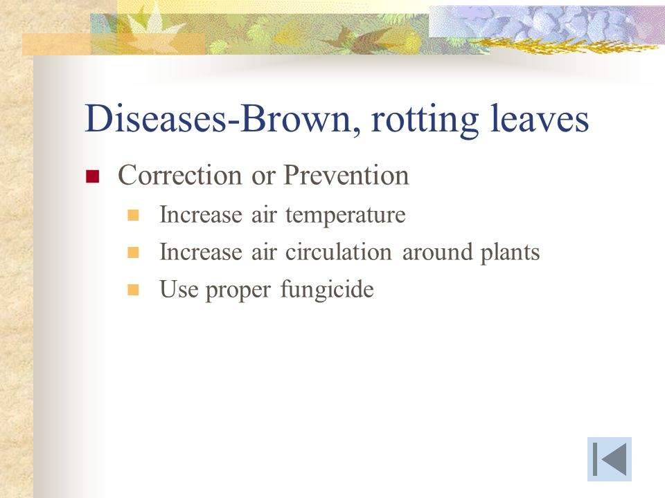 Diseases-Brown, rotting leaves Correction or Prevention Increase air temperature Increase air circulation around plants Use proper fungicide