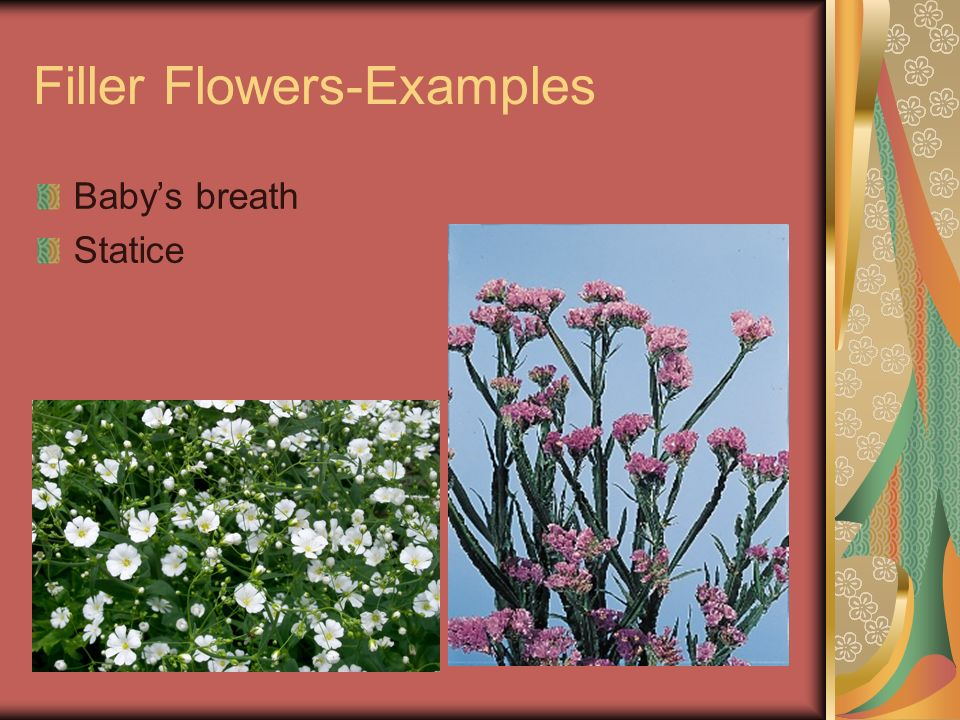 Filler Flowers-Examples Babys breath Statice