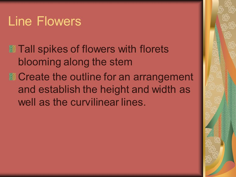 Line Flowers Tall spikes of flowers with florets blooming along the stem Create the outline for an arrangement and establish the height and width as w