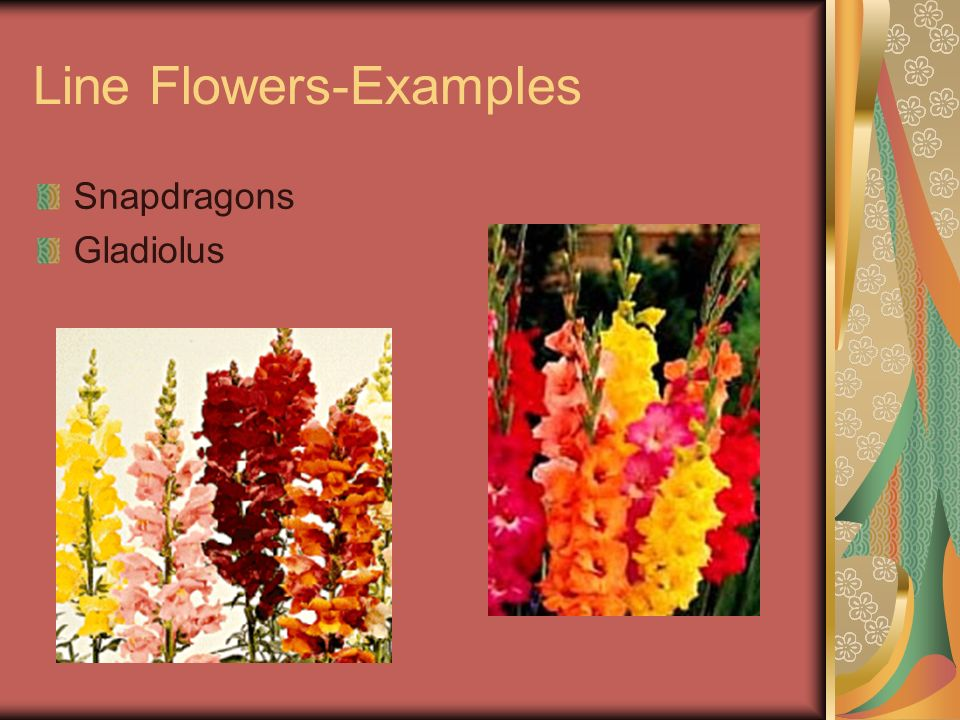 Steps in Designing Arrangements 5.Insert flower to make arrangement desired height 6.Insert more flowers to make design outline and focal point 7.Add other flowers as needed to make arrangement 8.Arrange filler flowers such as babys breath to give a completed appearance