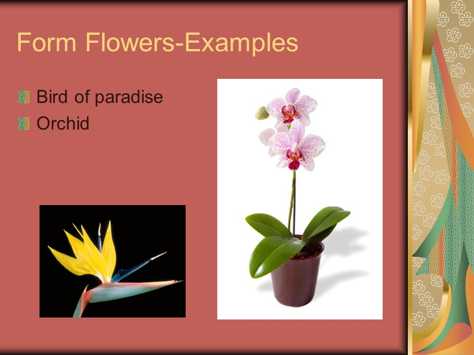 Form Flowers-Examples Bird of paradise Orchid