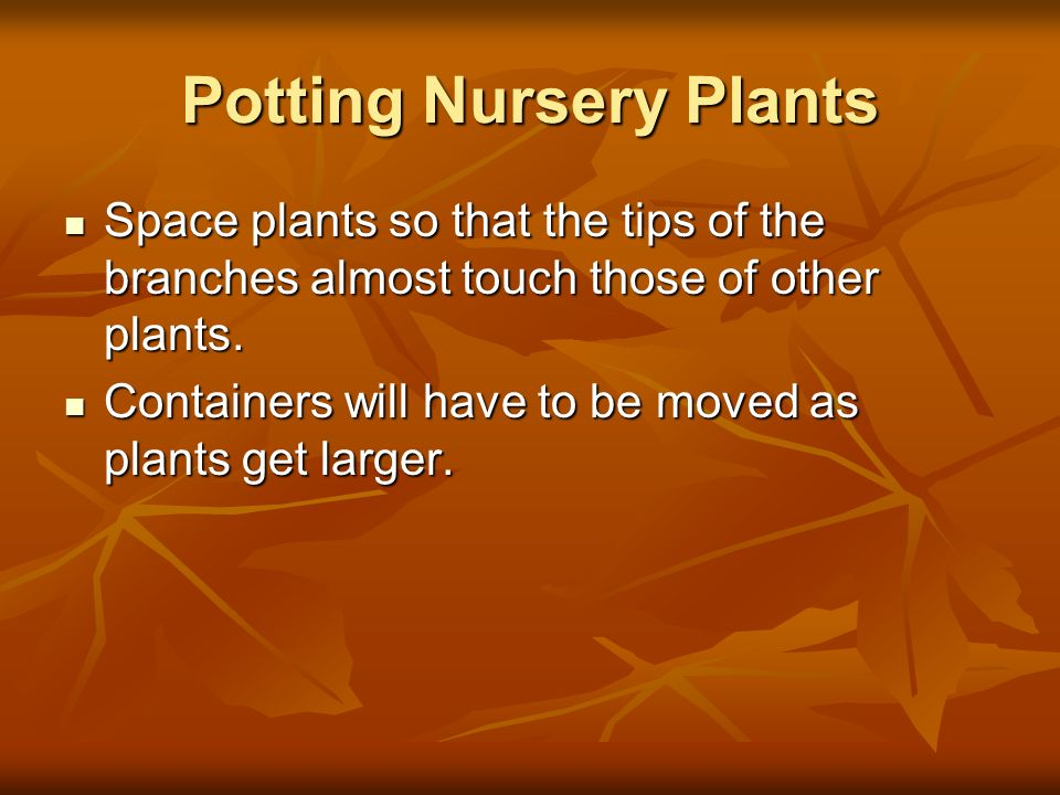 Potting Nursery Plants Space plants so that the tips of the branches almost touch those of other plants. Space plants so that the tips of the branches