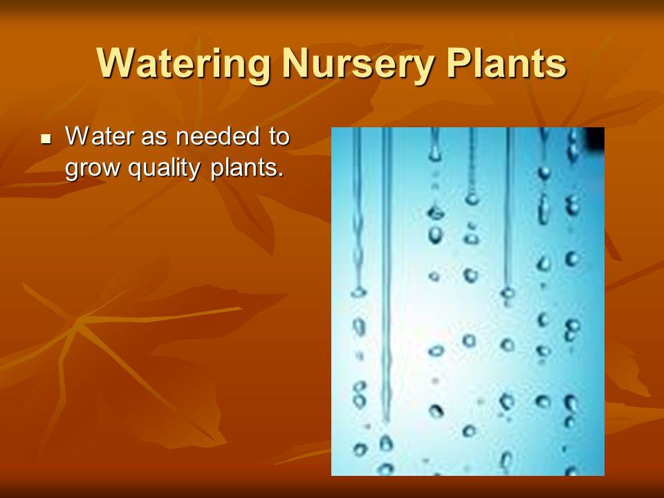 Watering Nursery Plants Water as needed to grow quality plants. Water as needed to grow quality plants.