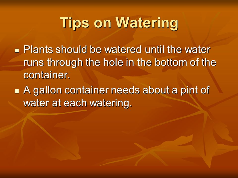 Tips on Watering Plants should be watered until the water runs through the hole in the bottom of the container. Plants should be watered until the wat