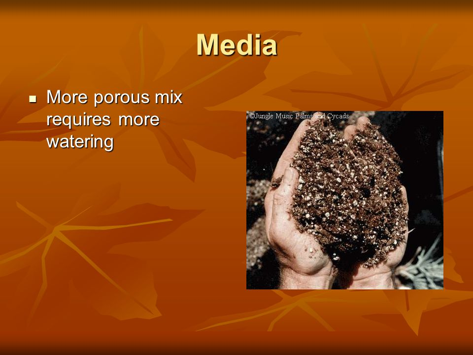 Media More porous mix requires more watering More porous mix requires more watering
