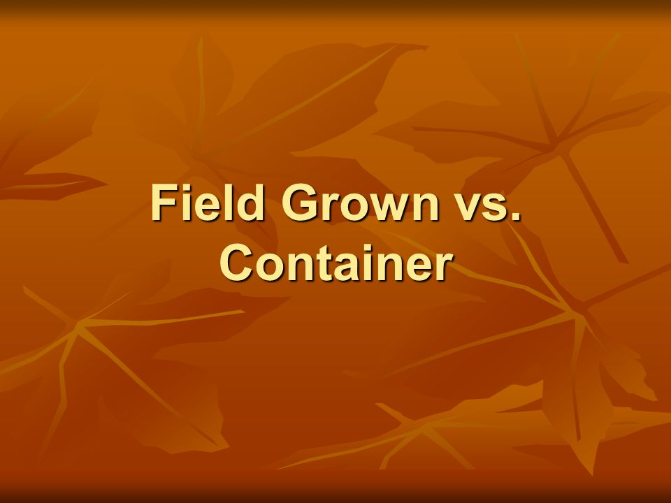 Field Grown vs. Container