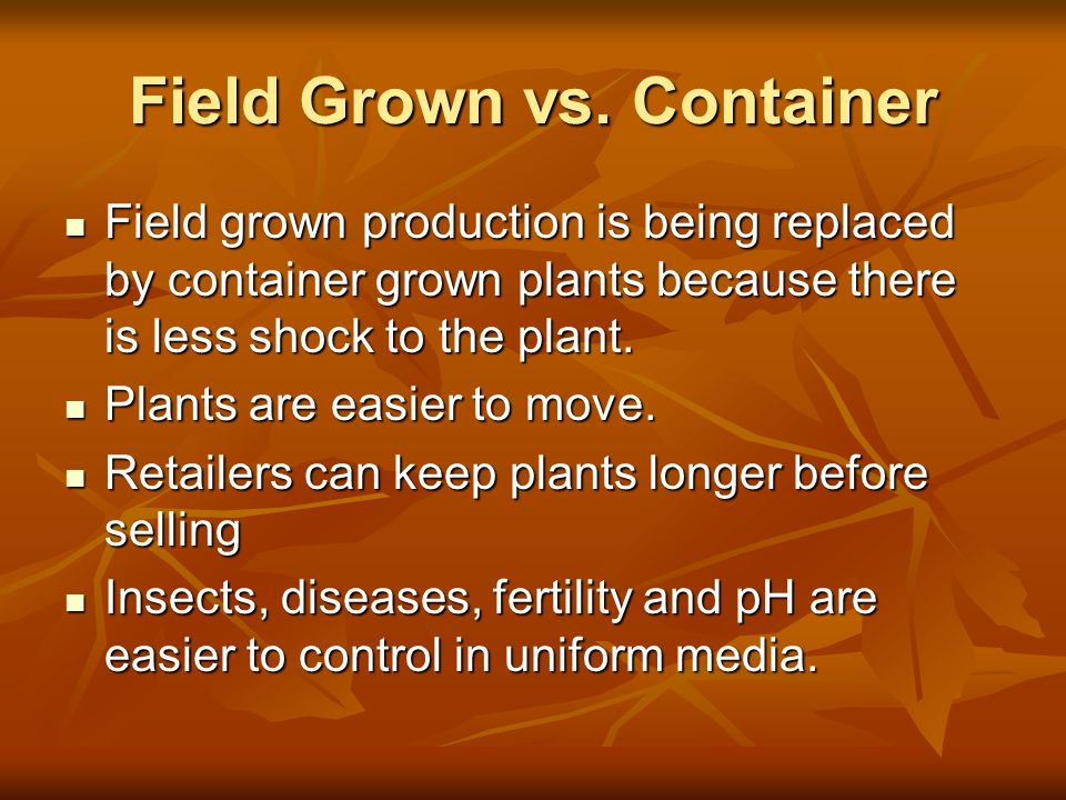 Field grown production is being replaced by container grown plants because there is less shock to the plant. Field grown production is being replaced